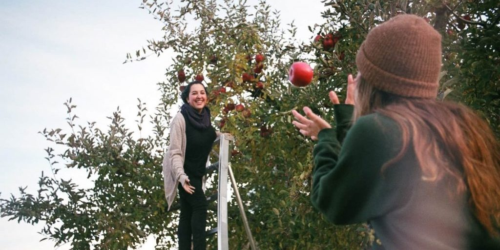 apple-orchard-action-catch-picking-tossing_t20_a88zjQ-min